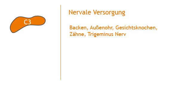 Chiropraktik_Recklinghausen_Wirbelsäule
