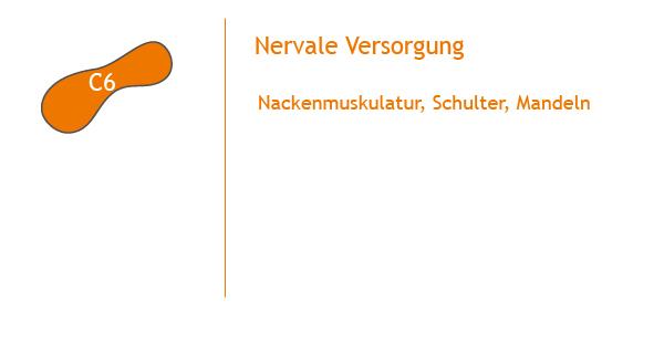 Chiropraktik_Recklinghausen_Wirbelsäule_check